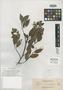Pygeum microphyllum Elmer, PHILIPPINES, A. D. E. Elmer 13198, Isotype, F
