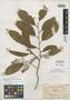 Pygeum preslii var. vulgare Koehne, PHILIPPINES, T. E. Borden 21736, Isotype, F