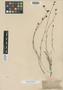 Asperula fasciculata Boiss., Syria, E. Boissier s.n., Type [status unknown], F