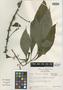 Hoffmannia ixtlanensis image