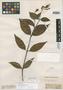 Palicourea riparia Benth., BRITISH GUIANA [Guyana], R. H. Schomburgk 337, Isotype, F
