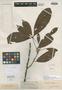 Matayba inelegans Spruce ex Radlk., BRITISH GUIANA [Guyana], R. H. Schomburgk 381, Isosyntype, F