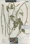 Paullinia buricana Croat, PANAMA, T. B. Croat 21979, Isotype, F