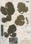 Paullinia hymenobractea Radlk., GUATEMALA, E. T. Heyde 6093, Isotype, F