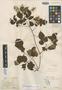 Paullinia polystachya Turcz., MEXICO, H. G. Galeotti 4309, Isotype, F