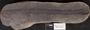 PP 58261 [HS, M] Taeniophyllum latifolium White, Moscovian / Desmoinesian, Francis Creek Shale Member, United States of America, Illinois, Grundy