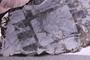 PE 39900 fossil9