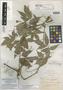 Paullinia boliviana f. glabrescens Radlk., Bolivia, H. H. Rusby 529, Isotype, F