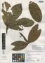 Paullinia bracteosa Radlk., COSTA RICA, A. Tonduz 11416, Isotype, F