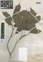 Nephelium uncinatum Radlk., BRITISH NORTH BORNEO [Malaysia, East Malaysia, Sabah], A. D. E. Elmer 21708, Isoneotype, F