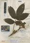 Paullinia colombiana Cuatrec., COLOMBIA, A. E. Lawrance 516, Holotype, F