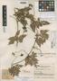 Paullinia filicifolia Cuatrec., COLOMBIA, J. Cuatrecasas 12895, Holotype, F