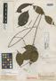Paullinia paullinioides Radlk., R. Spruce 2169, Isotype, F