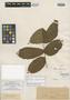 Paullinia rubiginosa f. setosa Radlk., J. S. Blanchet 7599, Lectotype, F