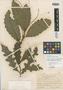 Solanum torvum var. daturifolium f. grandifolium O. Schmidt, DOMINICAN REPUBLIC, E. L. Ekman H12268, Syntype, F