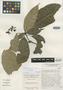 Cola porphyrantha Brenan, KENYA, J. P. M. Brenan 14557, Isotype, F