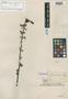Riedlea littoralis Poepp. & Endl., E. F. Poeppig 2519, Isotype, F