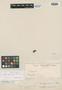 Freziera sericea Bonpl., COLOMBIA, F. W. H. A. von Humboldt, Isotype, F