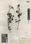 Aegiphila trinitensis Britton, TRINIDAD AND TOBAGO, W. E. Broadway, Isotype, F