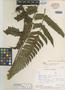 Cnemidaria singularis Stolze, Colombia, D. D. Soejarto 1571, Isotype, F