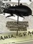 Collection Event Labels - UZ_Hauser_1898_00_00_001_labels