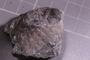 2021 Summer IMLS Ordovician Digitization Project. Sponge fossil