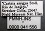 Feschaeria amycus meditrina labels 2