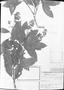 Field Museum photo negatives collection; München specimen of Leandra quinquedentata Cogn., C. F. P. Martius, Type [status unknown], M