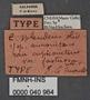 Carabus splendens auronitens race cupreonitens ab fastuosa HT labels