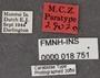 Bembidion alatum PT labels