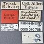 Dyschirius minutus aegypticus PT labels