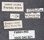 Pheggomisetes buresi PT labels