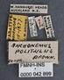 Anchomenus politulus PT labels
