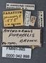 Anchomenus parabilis PT labels