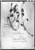 Bowlesia lobata image