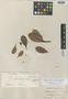 Ternstroemia laevigata Wawra, BRITISH GUIANA [Guyana], R. H. Schomburgk 573, Isotype, F