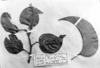 Field Museum photo negatives collection