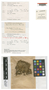 Lophocolea heterophylloides var. decurrens Pearson, Australia, W. A. Weymouth 1490, Isotype, F
