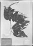 Field Museum photo negatives collection; München specimen of Croton palanostigma Klotzsch, BRAZIL, C. F. P. Martius, Type [status unknown], M