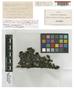 Grimmia inaequalis Dixon & Sainsbury, New Zealand, s.n., Isotype, F