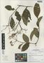 Viburnum jelskii image