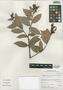 Cavendishia bracteata (Ruíz & Pav. ex J. St.-Hil.) Hoerold, Peru, I. M. Sánchez Vega 10018, F