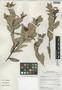 Cavendishia bracteata (Ruíz & Pav. ex J. St.-Hil.) Hoerold, Peru, I. M. Sánchez Vega 10025, F