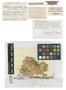 Sphagnum lankesteri H. A. Crum, COSTA RICA, C. H. Lankester 1801a, Holotype, F