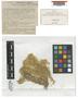 Sphagnum pulchrum (Lindb.) Warnst., SPAIN, P. Allorge 70, Type [status unknown]