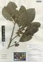 Ficus trigona L. f., Peru, I. M. Sánchez Vega 9867, F