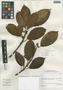 Ficus trigona L. f., Peru, I. M. Sánchez Vega 10203, F
