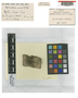 Melanotheca porosa C. W. Dodge, Sierra Leone, F. C. Deighton 4408, Isotype, F