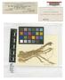 Sphagnum subsecundum var. tenellum Warnst., GERMANY, W. L. von Dietzow 450, Type [status unknown], F