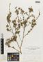Flora of the Lomas Formations: Sida rhombifolia L., Peru, A. Sagástegui A. 7603, F